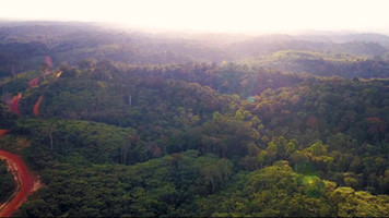 You're Wrong : visionnez le film signature de la Compagnie des Bois du Gabon